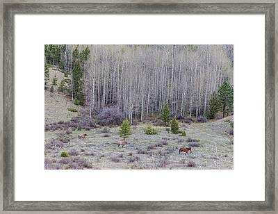 Three Horses Framed Print by James BO Insogna