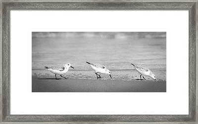 Three Hungry Little Guys Framed Print