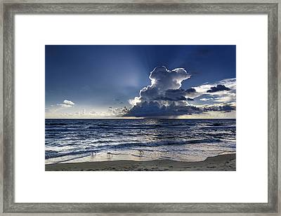 Framed Print featuring the photograph Three Ibises Before The Storm by Steven Sparks