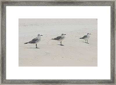 Three In A Row Framed Print by Beverly Hammond