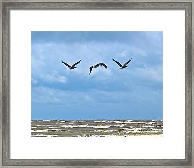 Framed Print featuring the photograph Three In Flight by Ken Frischkorn