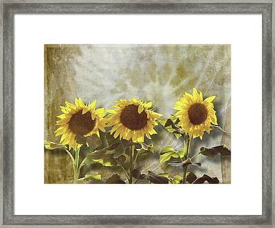 Three In The Sun Framed Print