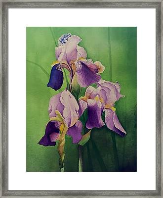 Three Iris Framed Print