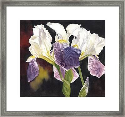 Three Irises Framed Print