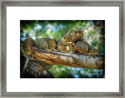 Three Is A Crowd  Framed Print by Robert Bales