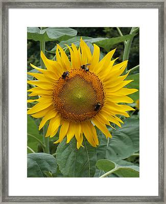 Three Is A Crowd Framed Print