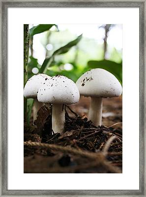 Three Is Company Framed Print by Bruce Bley