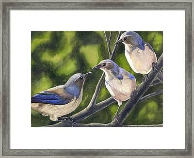 Three Jays Framed Print by Catherine G McElroy
