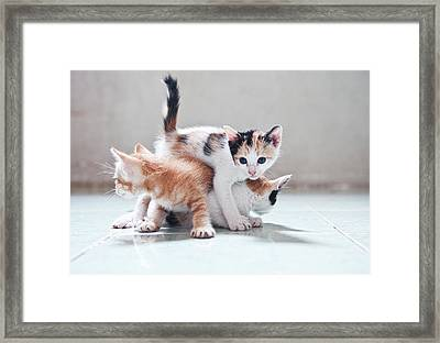 Three Kittens Framed Print by Photos by Andy Le