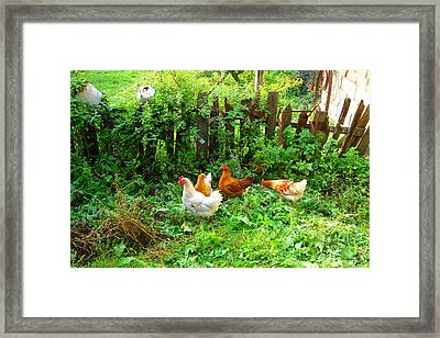 Three Kokas Full Colour Photograph Framed Print