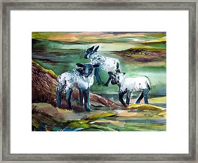 Three Lambs Framed Print by Mindy Newman