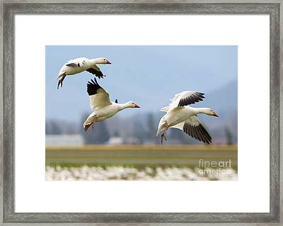 Three Landing Framed Print