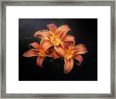 Three Lilies Framed Print