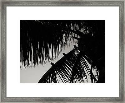 Three Little Birdies Framed Print by JAMART Photography
