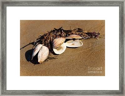 Three Little Shells Framed Print