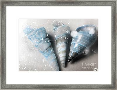 Three Little Trumpet Snail Shells Over Gray Framed Print
