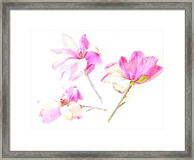 Framed Print featuring the photograph Three Magnolia Flowers by Linde Townsend