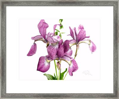Three Mauve Japanese Irises Framed Print