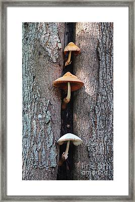 Three Mushrooms Framed Print by Ella Kaye Dickey