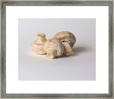 Three Mushrooms Framed Print by Robert Bissett