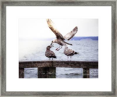 Three Of A Kind Framed Print by Melissa Messick