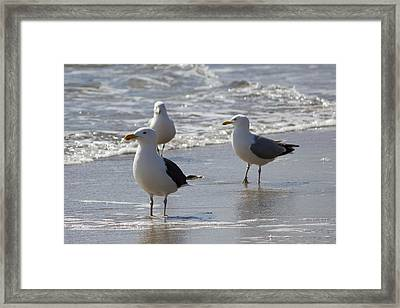 Three Of A Kind - Seagulls Framed Print