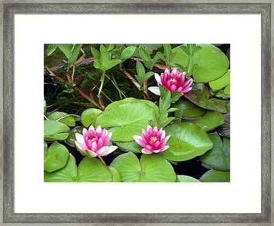 Three On A Pond Framed Print by Jeanette Oberholtzer