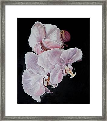 Three Orchids Framed Print