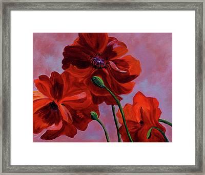 Three Oriental Poppies Framed Print