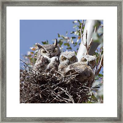 Three Pairs Of Eyes Framed Print by Elvira Butler
