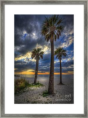 Three Palm Stew Framed Print by Marvin Spates