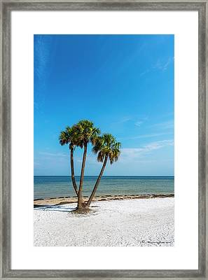 Three Palms Framed Print by Marvin Spates