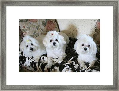 Three Peas In A Pod Framed Print by BJ Redmond