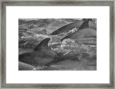 Framed Print featuring the photograph Three Peas In A Pod by Steven Santamour