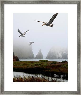 Three Pelicans In Portrait Framed Print by Wingsdomain Art and Photography
