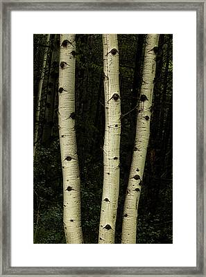 Framed Print featuring the photograph Three Pillars Of The Forest by James BO Insogna