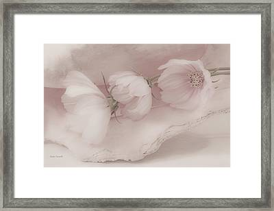 Three Pink Cosmo Flowers Framed Print by Sandra Foster