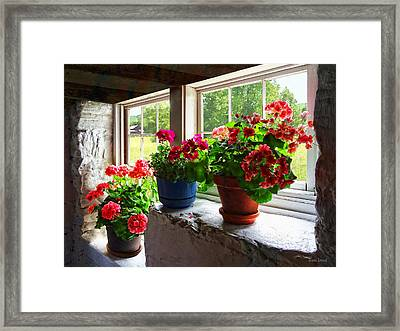 Three Pots Of Geraniums On Windowsill Framed Print by Susan Savad