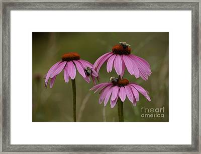 Framed Print featuring the photograph Three by Randy Bodkins