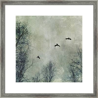 Three Ravens Framed Print