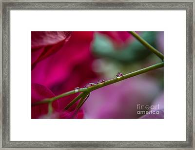 Three Reflecting Drops Framed Print by Michelle Meenawong