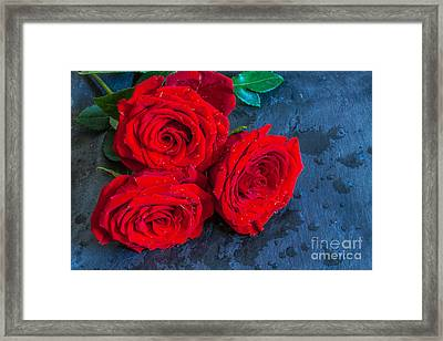 Three Roses On Slate Still Life Framed Print by Randy Steele