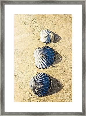 Three Scallop Shells Framed Print by Jorgo Photography - Wall Art Gallery