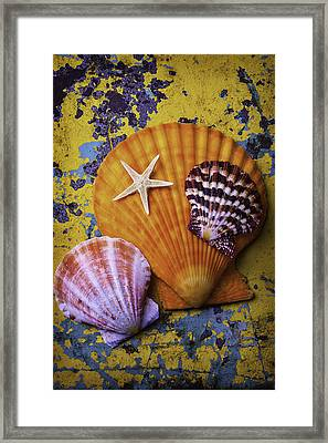 Three Sea Shells And Starfish Framed Print by Garry Gay