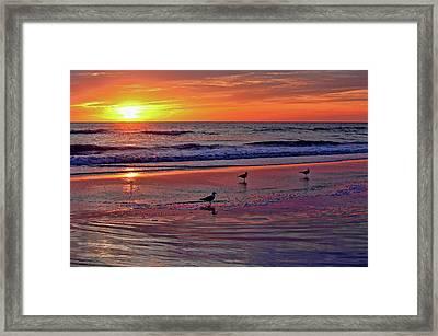 Three Seagulls On A Sunset Beach Framed Print