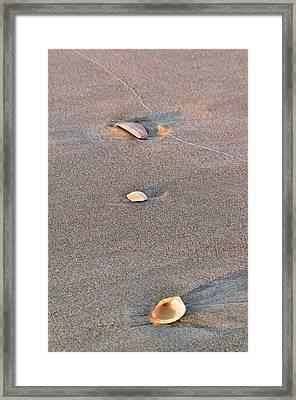 Three Shells Framed Print