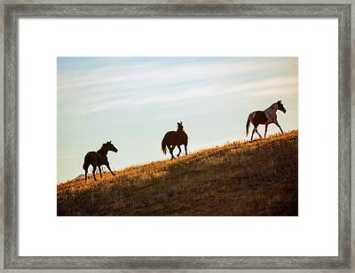 Three Side Framed Print by Todd Klassy