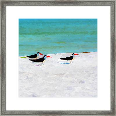 Three Skimmers Framed Print