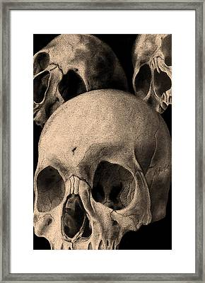 Three Skulls Are Better Than One Framed Print by Phil Spaulding