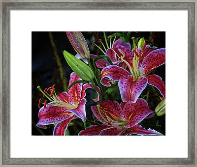 Framed Print featuring the photograph Three Stargazer Blooms by Robert Pilkington
